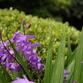 写真: DSC02486報徳二宮神社
