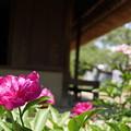 写真: たてもの園(綱島家)