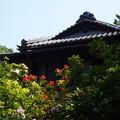 写真: DSC02693たてもの園(高橋是清邸)