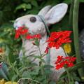 写真: 玄関先の小花2