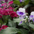 DSC03174掛川花鳥園