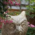 DSC03179掛川花鳥園