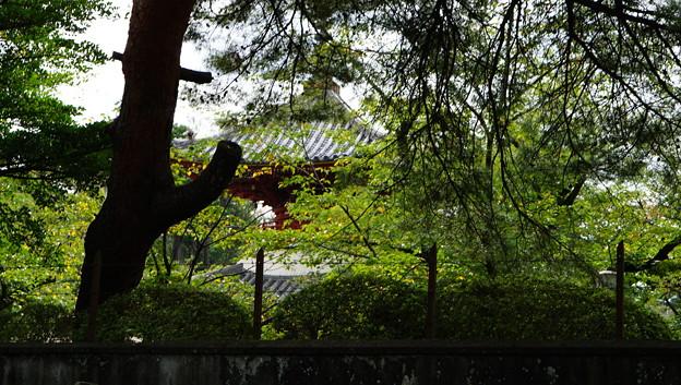 川越散歩(2017)49