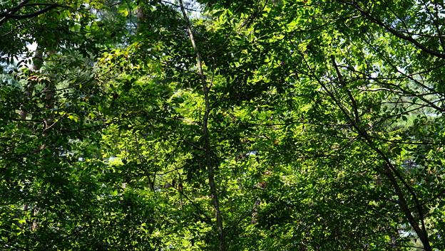 国営武蔵丘陵森林公園7
