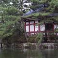 Photos: 石神井公園8
