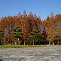 DSC05897水元公園