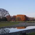 写真: 秋の終わりに