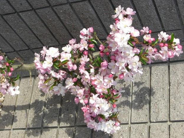 写真: 花壇の花びら