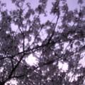 写真: 花のある