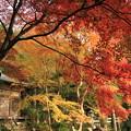 写真: 2382 嵯峨のとっておき@京都