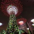 写真: 2400 夜の植物園@シンガポール