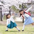 写真: 桜の下で、まねっこ。