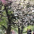 Photos: 春四番