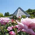 バラと温室