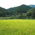 Photos: 里山散策
