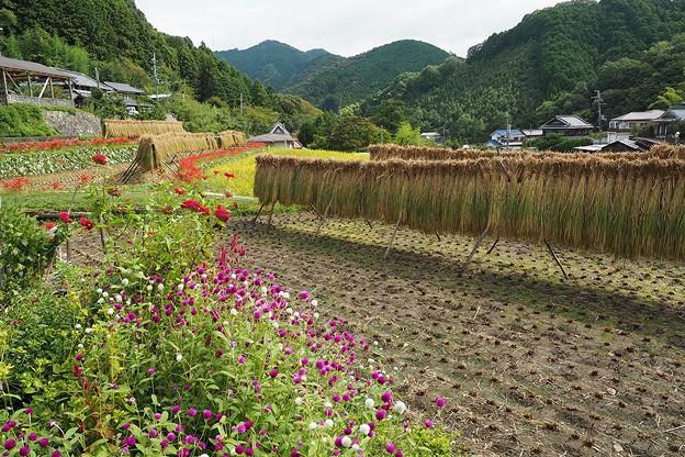 Photos: 里山散歩