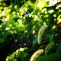 写真: クモ