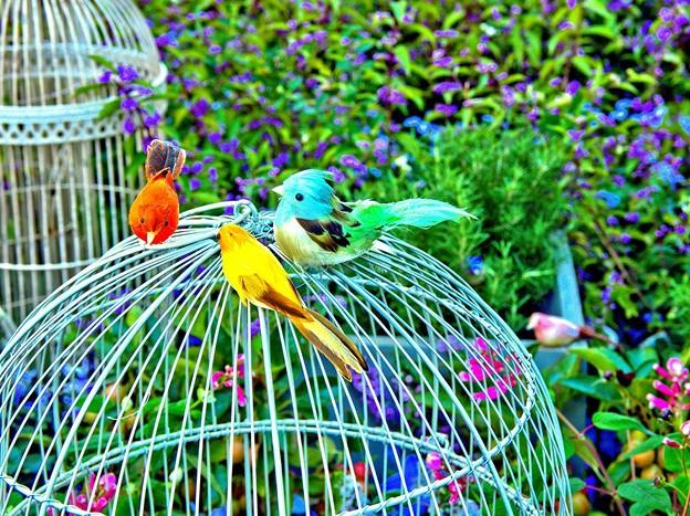 Photos: 籠の外の鳥