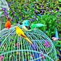 写真: 籠の外の鳥