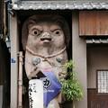 Photos: たぬき茶屋