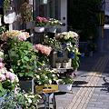 Photos: 花屋さん