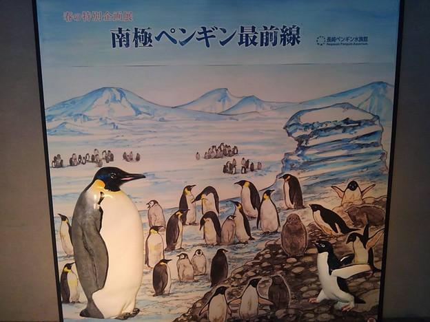20170415 長崎ペンギン水族館 02