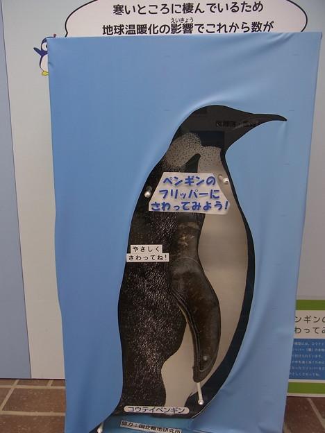 20170415 長崎ペンギン水族館 06