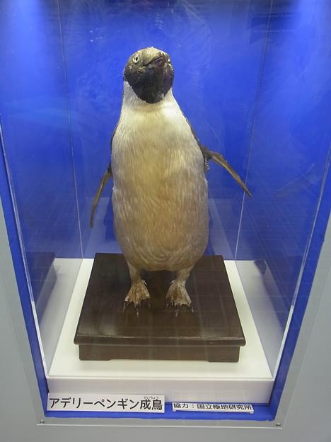 20170415 長崎ペンギン水族館 21