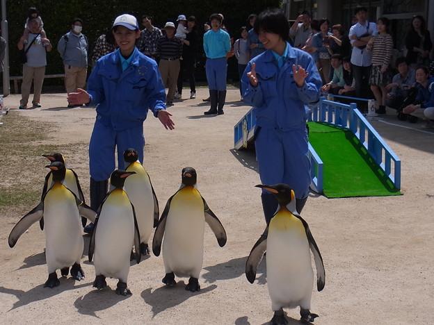 20170415 長崎ペンギン水族館 29