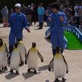 Photos: 20170415 長崎ペンギン水族館 29