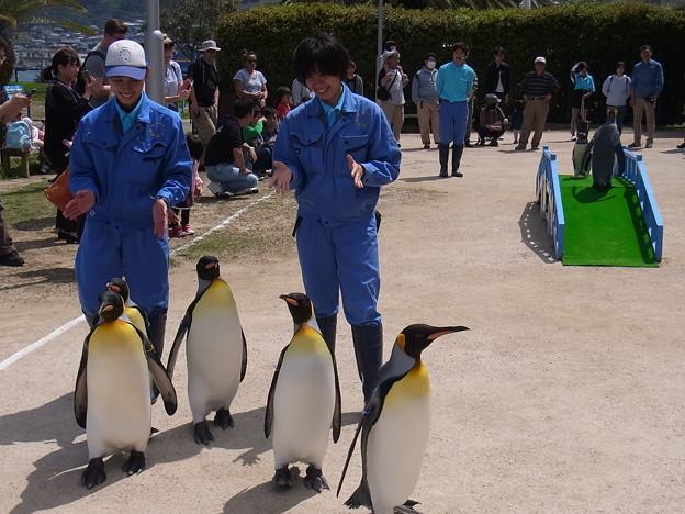 20170415 長崎ペンギン水族館 31