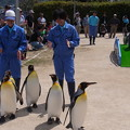 Photos: 20170415 長崎ペンギン水族館 31