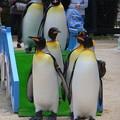 20170415 長崎ペンギン水族館 35