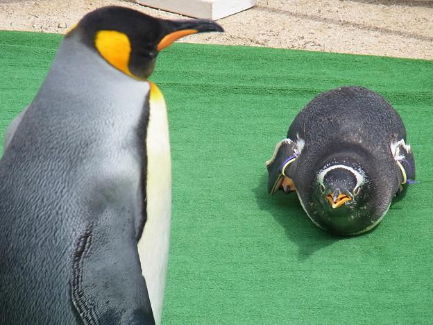20170415 長崎ペンギン水族館 36
