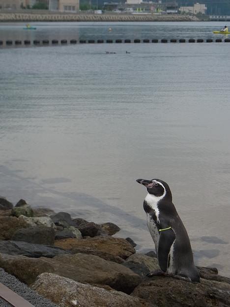 20170923 長崎ペンギン水族館13