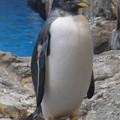 写真: 20170923 長崎ペンギン水族館16