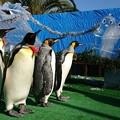 Photos: 20171223 長崎ペンギン水族館05