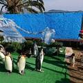 20171223 長崎ペンギン水族館06