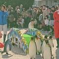 20171223 長崎ペンギン水族館13