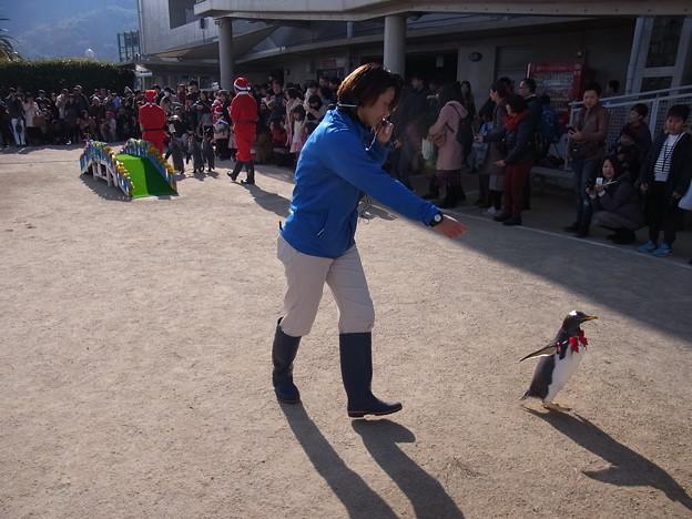 20171223 長崎ペンギン水族館25
