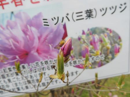 4/15(土) 鈴鹿植木まつりで こにゅどうくんとかこもしかとかゆめはまちゃんとか。