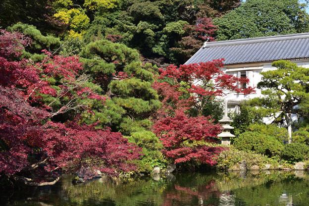 長府庭園紅葉 4