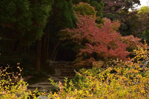 長府庭園紅葉 10