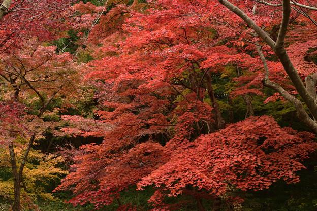 毛利氏庭園の紅葉 3