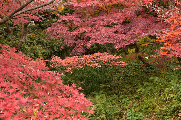毛利氏庭園の紅葉 6