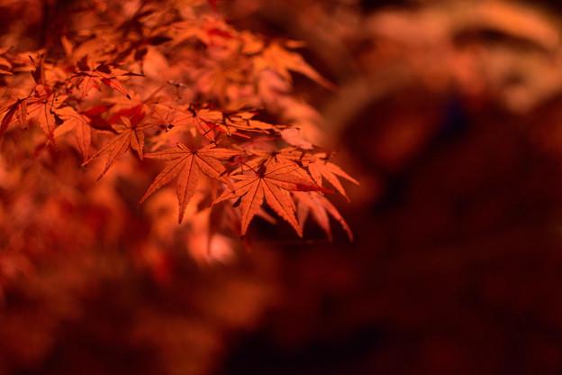 功山寺法堂前の紅葉