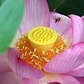 Photos: いい香りの公園、蜂も蜜集めに♪