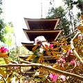 室生寺五重の塔