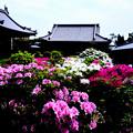 写真: 法雲寺