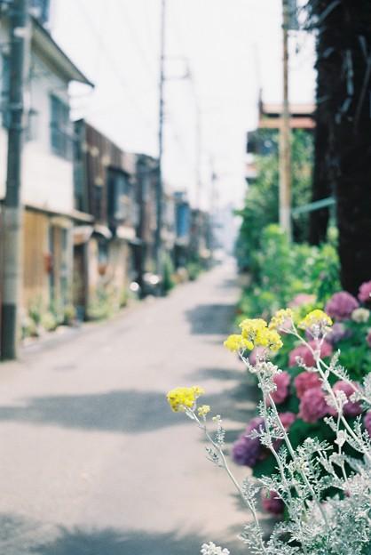 路地に咲く